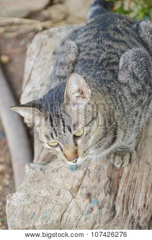 cute tabby cat on wood log