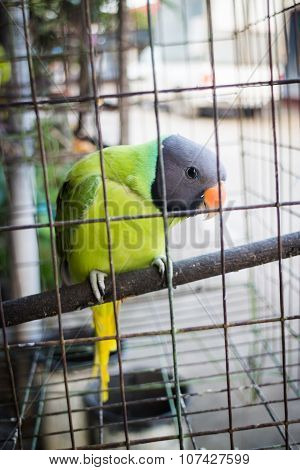 Green Parrot In The Cage