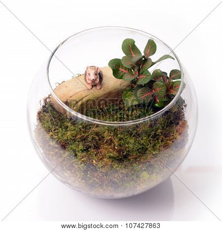 Terrarium In Glass Bottle on white background.
