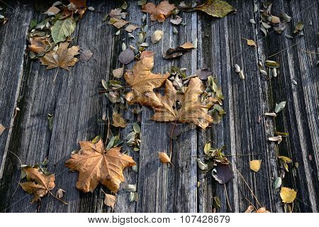 autumn leaves on the wooden floor