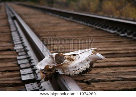 Skull On Train Track