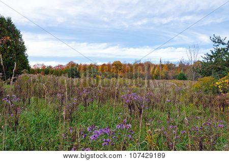 Fall's Meadow
