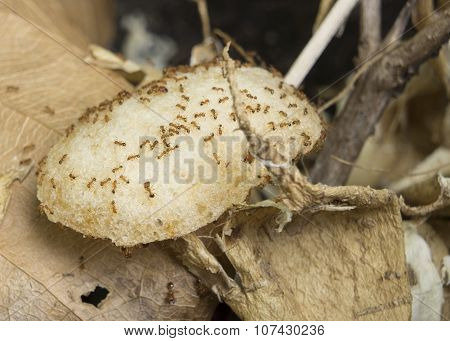 Ant Nest Chip Eat Carry Animal Insect Home Concept
