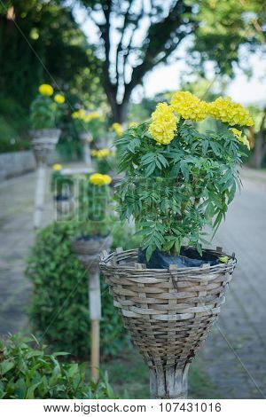 Yellow Flower Bloom In The Basket