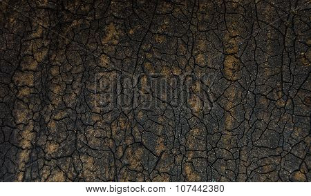 cracked on the dry earth