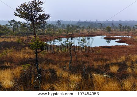 Rainy morning bog