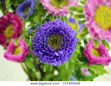 blossom flower bouquet