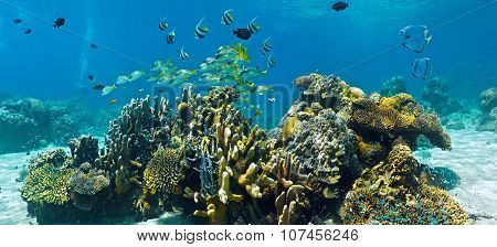 Shoal of fish on the coral reef - panorama
