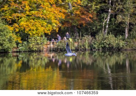 Stover Lake