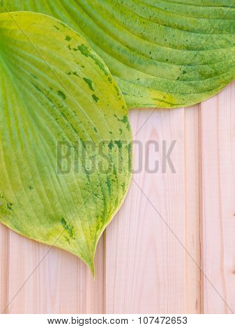 Green Leaves With Veins On The Wooden Planks