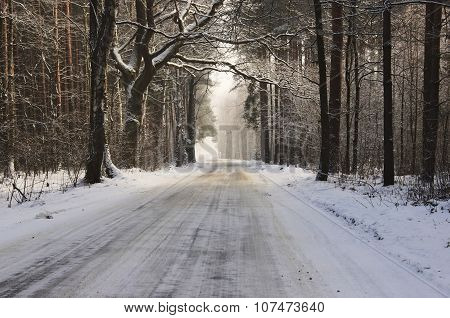 The road in winter.