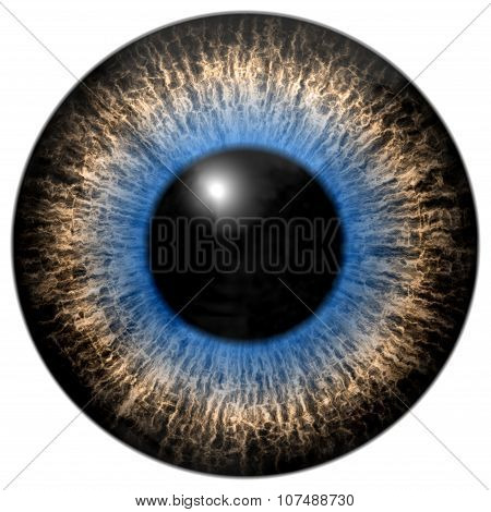 Grey And Blue Eye