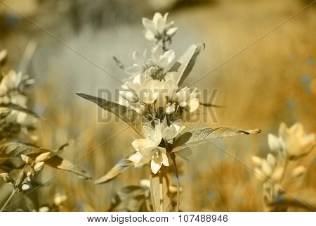 Bouquet Of Yellow Flowers On A Brown Background