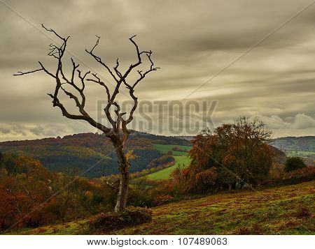 Dead Tree in Foreboding Sky
