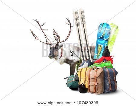 Baggage tourist