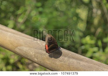 Butterfly Against Blur Background At Iguazu Park