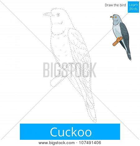 Cuckoo bird learn to draw vector