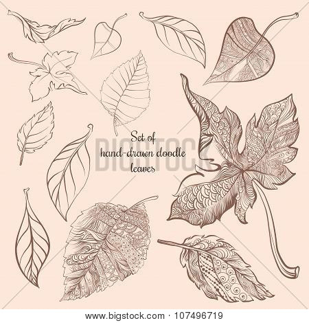 Set of hand-drawn doodle autumn forest leaves