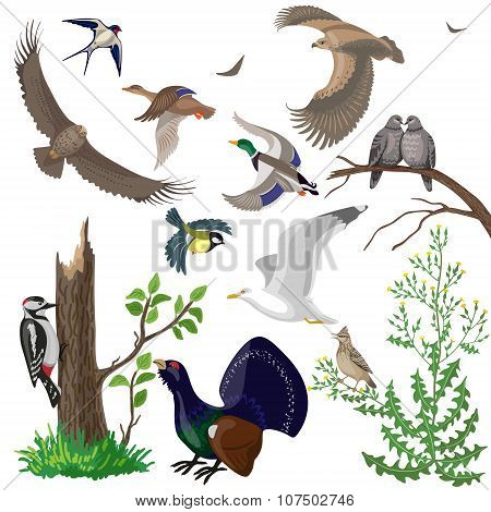 Set Of Wild Birds