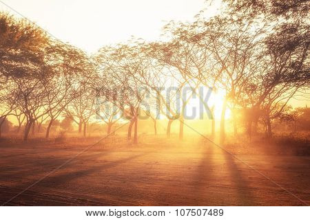 Rural Landscape With Sining Sunset Rays. Abstract Nature