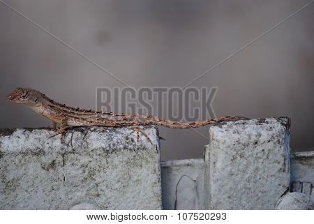 a lizard sunbathing on a trash can