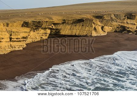 Paracas National Reserve. The Very First Marine Conservation Center In Peru, Refer To The Prolific W