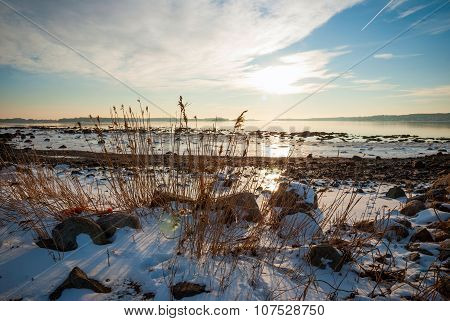 Dry Grass In Frozen Fjord In Winter Sunshine, Norway