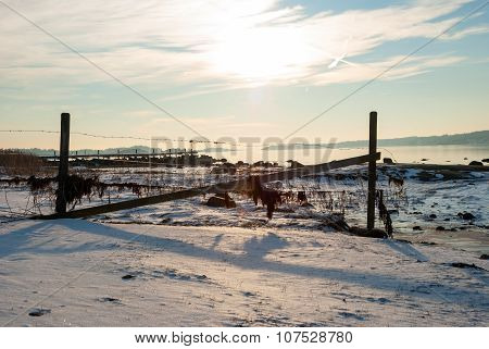 Fence In Frozen Fjord In Winter Sunshine, Norway