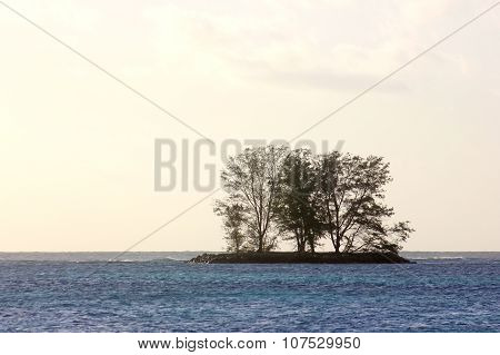 Silhouettes Of Trees On A Tiny Island