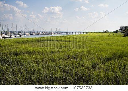 St Simon's Island Georgia Grasslands