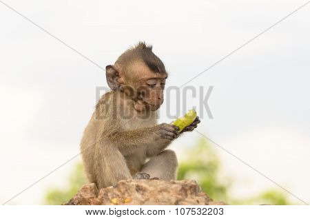 Portrait Of A Monkey In Wildlife