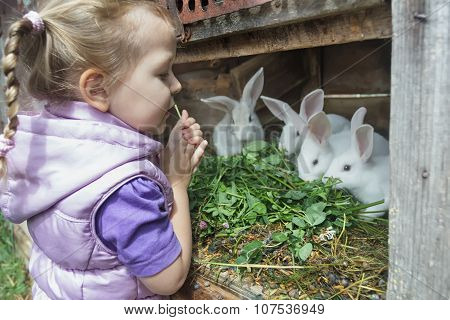 Preschooler Blonde Girl In Warm Hoodied Violet Nylon Vest  Feeding Farm Domestic Rabbits With Fresh