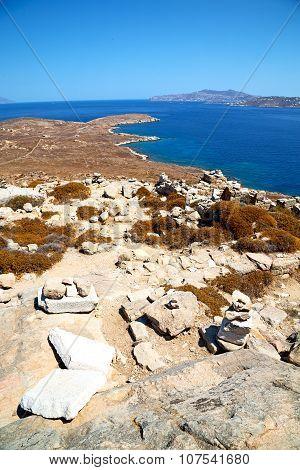 Plant  In Delos Greece The
