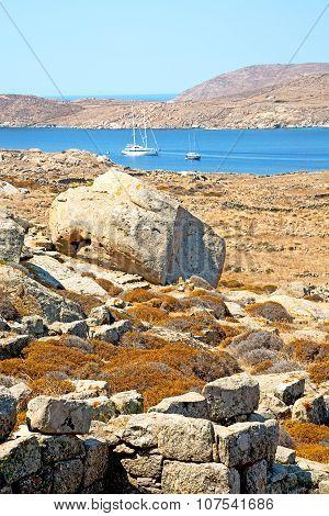 Plant  In Delos Greece The Historycal