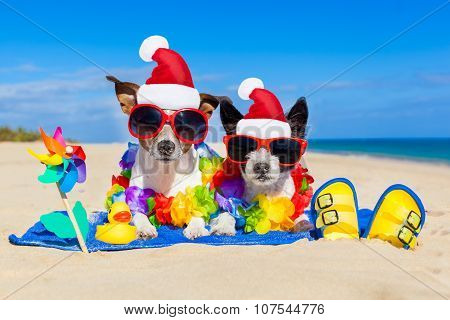 Couple Of Dogs On Christmas Summer Vacation