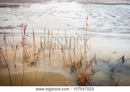 Floded Field In Winter