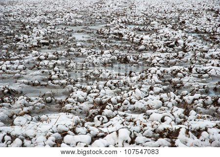 Frozen Field In Winter Close Up