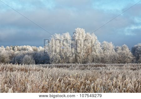 Winter Landscape With The Trees Covered With Hoarfrost