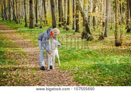 Woman With Dog Walking In The Birch Alley, Sunny Autumn Day