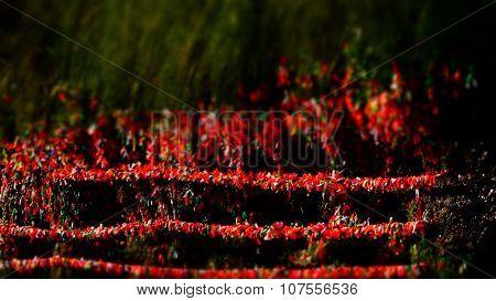Commemorative Colored Ribbon