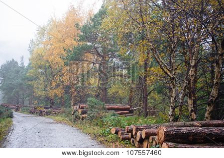 Deerpark And Djouce Woods, Ireland