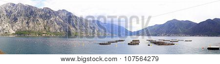 Aquafarming Montenegro