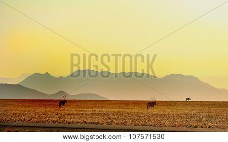 Gemsbok Oryx against the Namib Landscape