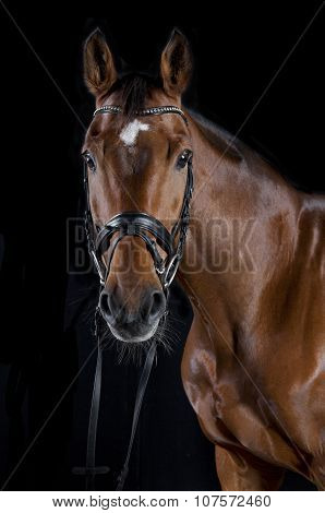 Brown Jumping Horse Against Black Background