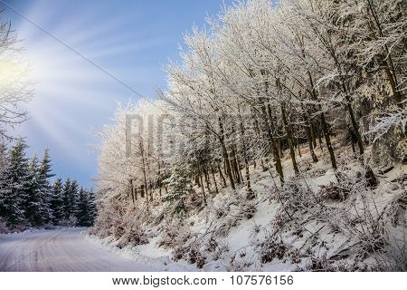 Bright and solar New Year's morning. The ski track passes on the way to snow-covered wood