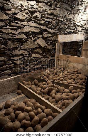 Vegetable Cellar
