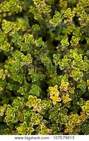 Green Plant On A Background