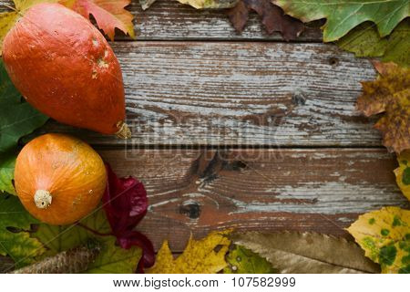 Organic Hokkaido Pumpkins In Rustic Autumn Decoration With Copy Space