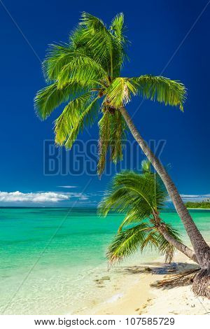 Couple of palm trees against vibrant blue sky, Fiji Islands