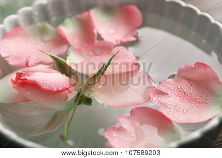 Tender pink rose and petals in a bowl of water, close-up